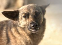 Perro con los dientes incorrectos, primer, primer Imágenes de archivo libres de regalías