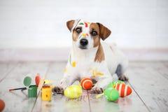 Perro con los huevos de Pascua pintados Fotografía de archivo libre de regalías