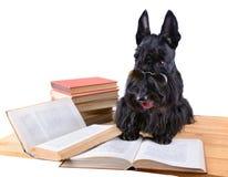 Perro con los libros Imagen de archivo