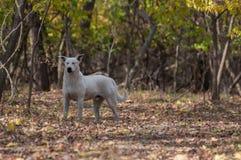 Perro con los ojos cerrados en el bosque foto de archivo libre de regalías
