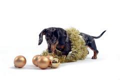 Perro con los ornamentos de la Navidad Foto de archivo