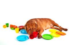 Perro con los platos en blanco Imágenes de archivo libres de regalías