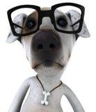 Perro con los vidrios Fotografía de archivo