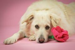 Perro con rosa Imagenes de archivo