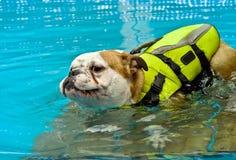Perro con un chaleco salvavidas imagen de archivo libre de regalías