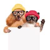 Perro con un gato que se sostiene en su bandera del blanco de las patas Foto de archivo libre de regalías