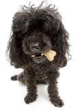 Perro con un hueso imagen de archivo