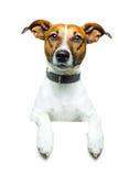Perro con una bandera blanca Imagenes de archivo