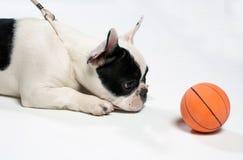 Perro con una bola Imagen de archivo