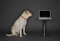 Perro con una computadora portátil Imagen de archivo libre de regalías
