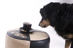 Perro con una taza de café foto de archivo