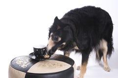 Perro con una taza de café imagenes de archivo