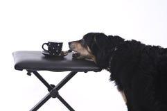 Perro con una taza de café imágenes de archivo libres de regalías