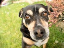 Perro confuso Imágenes de archivo libres de regalías