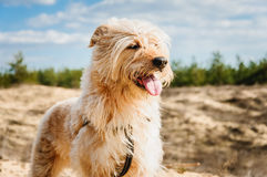 Perro contento Foto de archivo libre de regalías