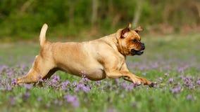 Perro corriente fotografía de archivo