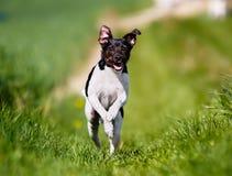 Perro corriente Fotos de archivo