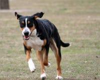 Perro corriente Imagenes de archivo