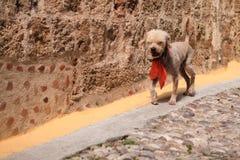 Perro corriente Foto de archivo libre de regalías