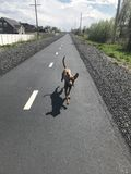 Perro corriente Imagen de archivo