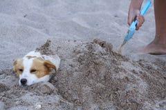Perro cubierto con la arena Imagenes de archivo