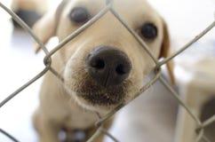 Perro curioso Imagen de archivo libre de regalías
