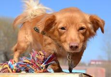 Perro curioso Foto de archivo libre de regalías