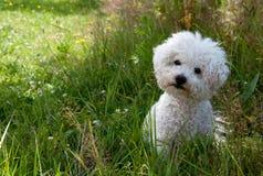 Perro curioso lindo Fotografía de archivo