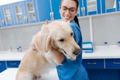 Perro dócil encantado del abarcamiento del veterinario Imagen de archivo libre de regalías