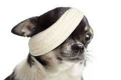 Perro dañado imagen de archivo