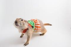 Perro de #1 Imagen de archivo libre de regalías
