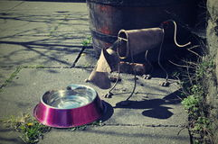 Perro de acero Imágenes de archivo libres de regalías