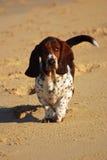 Perro de afloramiento Foto de archivo libre de regalías