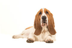 Perro de afloramiento joven que miente abajo haciendo frente a la cámara vista del lado Fotografía de archivo libre de regalías