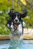 Perro de agua Foto de archivo libre de regalías