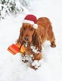 Perro de aguas de la Navidad en regalos del cojinete de la nieve Imágenes de archivo libres de regalías