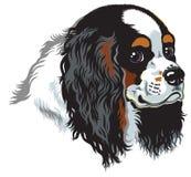 Perro de aguas de rey Charles arrogante tricolor Imagen de archivo