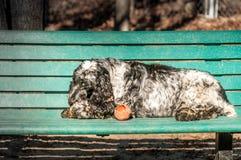 Perro de aguas de saltador inglés Imagen de archivo libre de regalías