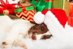 Perro de aguas de saltador inglés que lleva la piel de Santa Hat While Sleeping On imagen de archivo