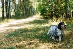 Perro de aguas en fondo verde imagen de archivo libre de regalías