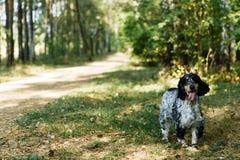 Perro de aguas en fondo verde foto de archivo