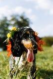 Perro de aguas en fondo verde fotos de archivo libres de regalías