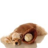 Perro de aguas y béisbol de cocker foto de archivo libre de regalías
