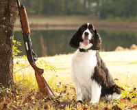 Perro de aguas y escopeta Foto de archivo libre de regalías