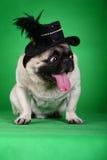 Perro de animal doméstico divertido Imagen de archivo libre de regalías