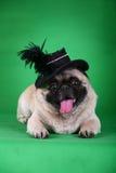 Perro de animal doméstico divertido imagen de archivo