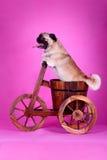 Perro de animal doméstico divertido imagenes de archivo