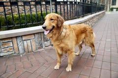 Perro de animal doméstico en el área residencial Imagenes de archivo