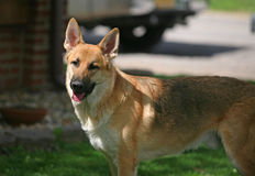 Perro de animal doméstico en el sol Imagen de archivo libre de regalías