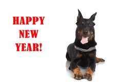 Perro de Beauceron en el ` blanco de la Feliz Año Nuevo del ` del fondo y de la inscripción Fotos de archivo